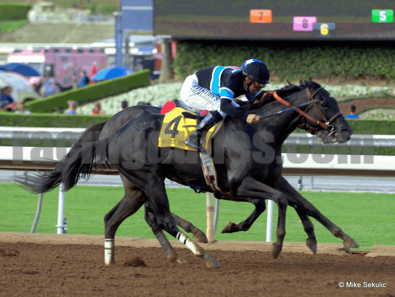 Shared Belief winning 2014 Awesome Again Stakes at Santa Anita Park - SA - 9/27/14 - Photo Credit: Mike Sekulic