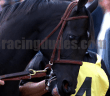 Shared Belief2
