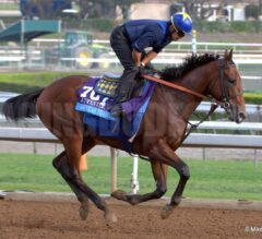 Wednesday Best Bets and Value Plays 11/12/14