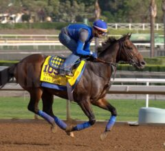Where are they Now: 2014 Breeders' Cup Winners