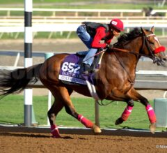 Breeders' Cup Workout Photos at Santa Anita