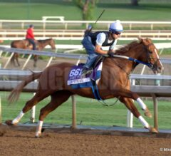 Oaklawn Preview Part 4 of 6: The Older Males