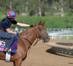 Free Tuesday 12/2/14 Portland Meadows, Turf Paradise, and Zia Park Picks