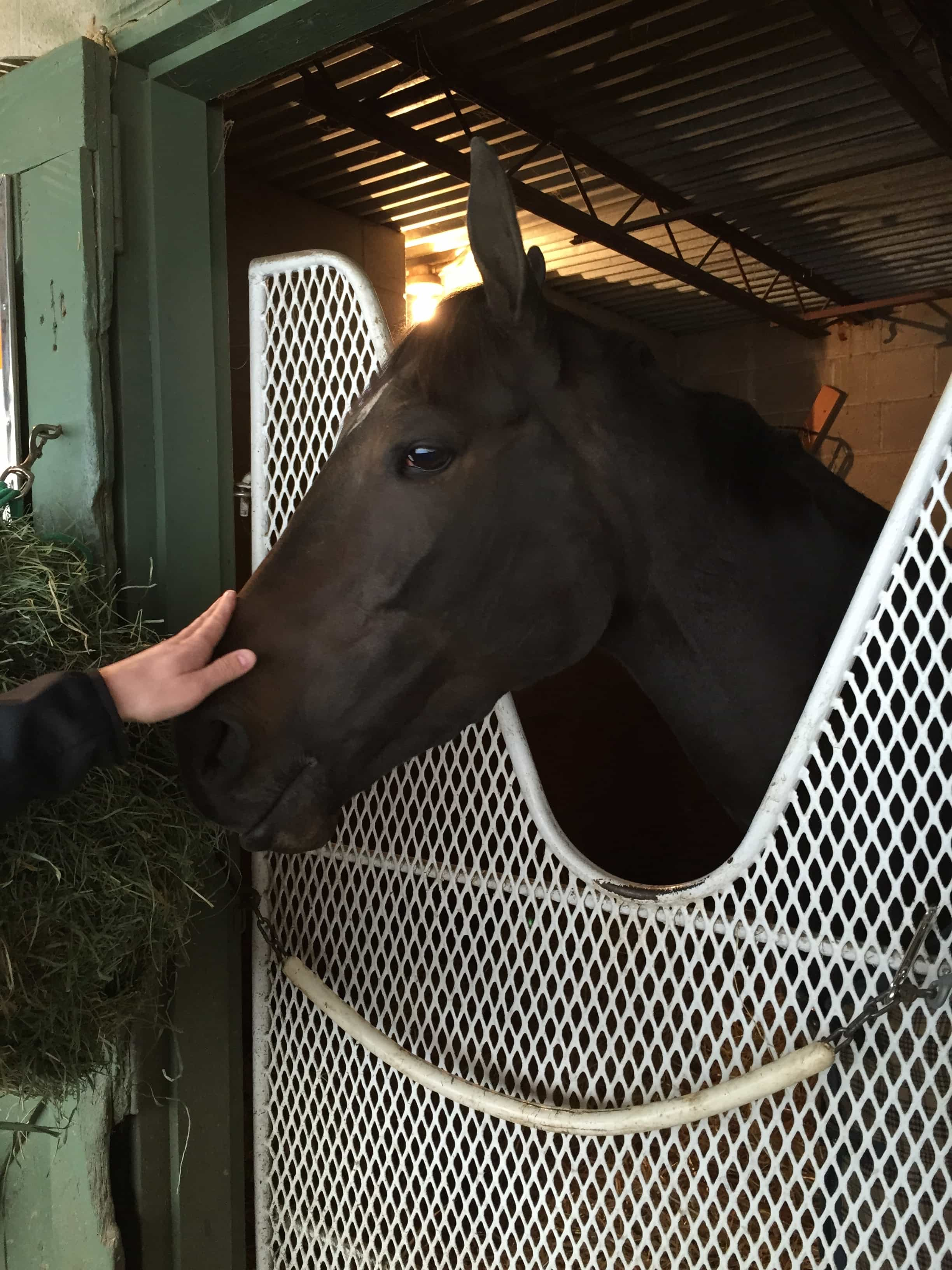 Zayat Stables' Courageous Julie at Oaklawn Park