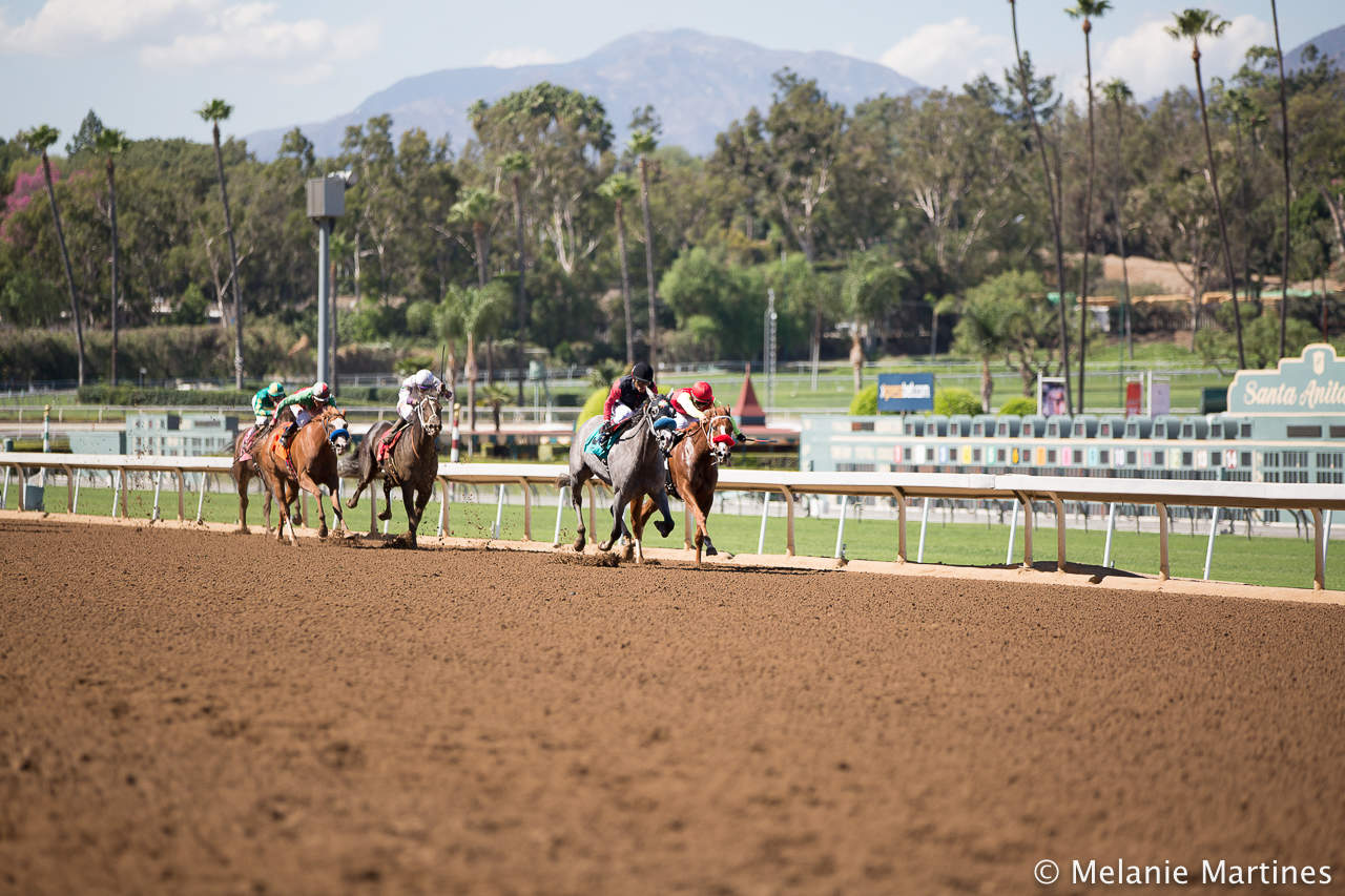 Santa Anita Park Stretch (Photo Credit: Melanie Martines)