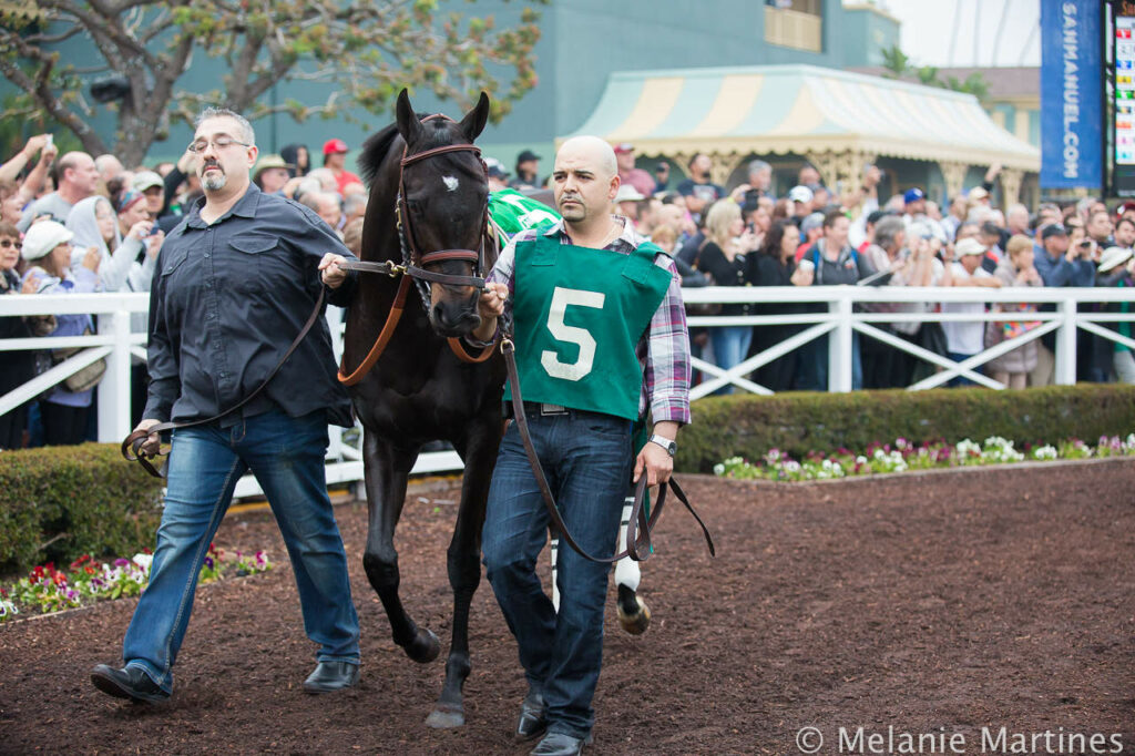 Shared Belief in Paddock at Santa Anita Park