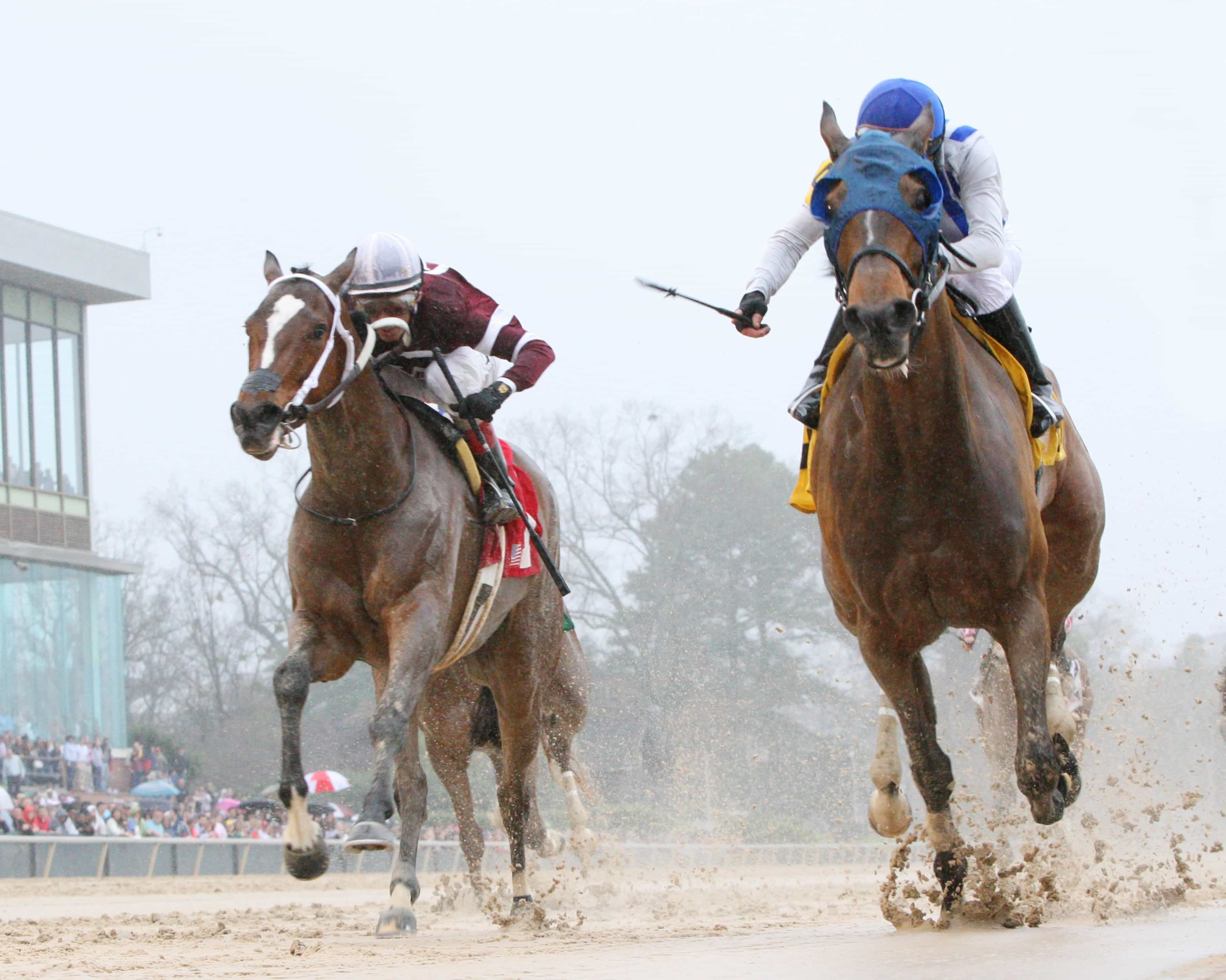 Gold Medal Dancer - The Azeri - Gr II - The 29th Running - 03-14-15 - R07 - OP - Under Rail - Photo credit: Oaklawn/Coady Photography