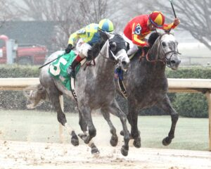 Race Day - The Razorback - Gr III - The 56th Running - 03-14-15 - R08 - OP - Finish 2 - Photo credit: Oaklawn/Coady Photography
