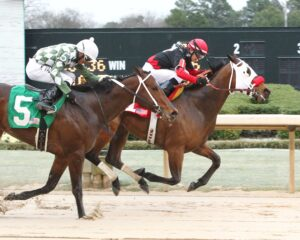 Subtle Indian - The Gazebo - The 4th Running - 03-21-15 - R09 - OP - Finish - Photo credit: Oaklawn/Coady Photography