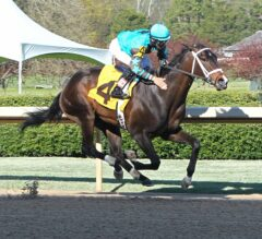 Oaklawn Report #12: Arkansas Breds Take Center Stage