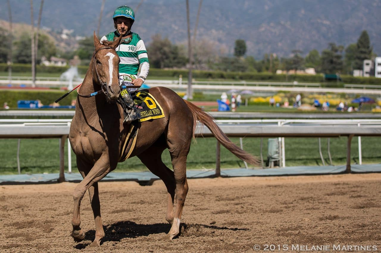Stellar Wind After Winning Santa Anita Oaks (GI) at Santa Anita.