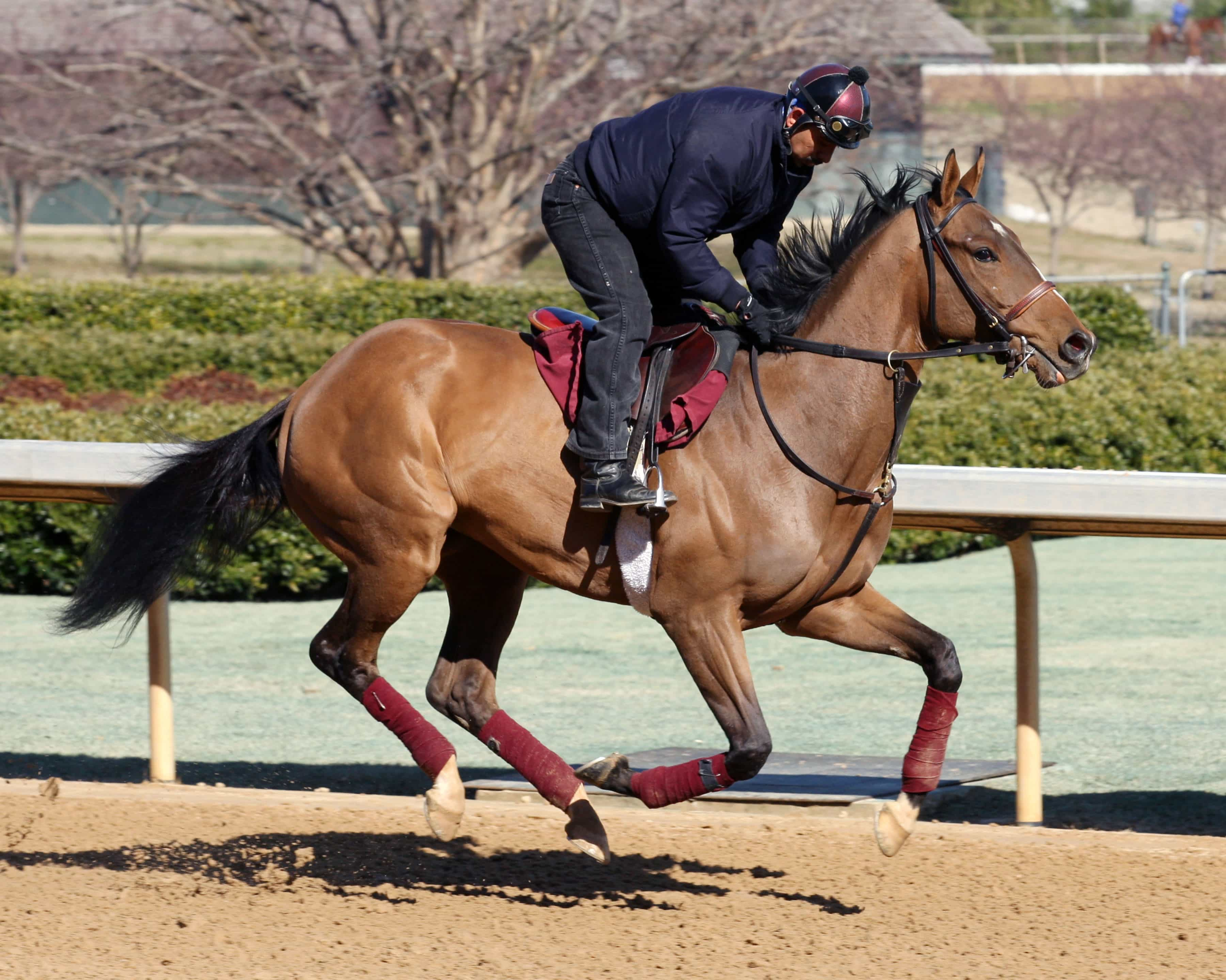 Hillbilly Royalty-OP-Workouts-021915-001- Photo credit: Oaklawn/Coady Photography