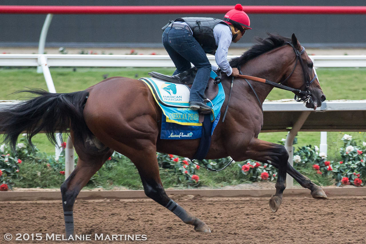 American Pharoah - FINAL WORKOUT AT DEL MAR IN PREPERATION FOR TRAVERS STAKES (Grade I) - 08-23-15 - DMR - Photo credit: Melanie Martines