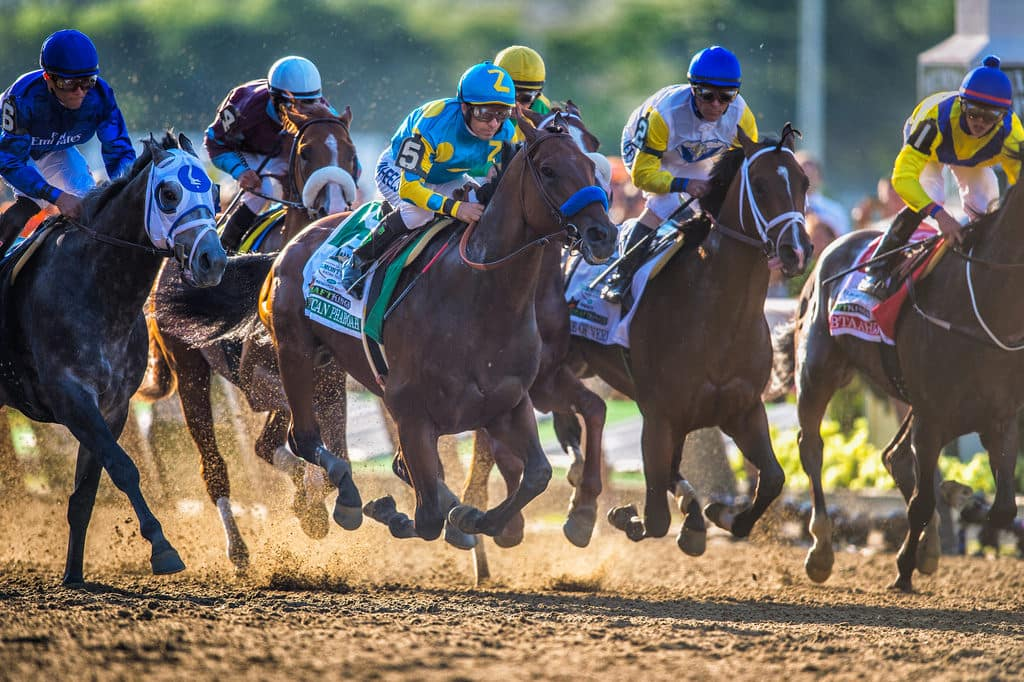 American Pharoah at the start of the race in Belmont Stakes - Photo credit: Diana Robinson
