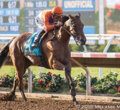 Free Late Pick 4 Selections 12/22/15