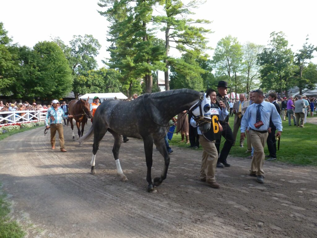 Frosted - TRAVERS STAKES (Grade I) - 08-29-15 - R11 - SAR - Photo credit: Mike Spector (Follow him on Twitter @SaratogaSlim)