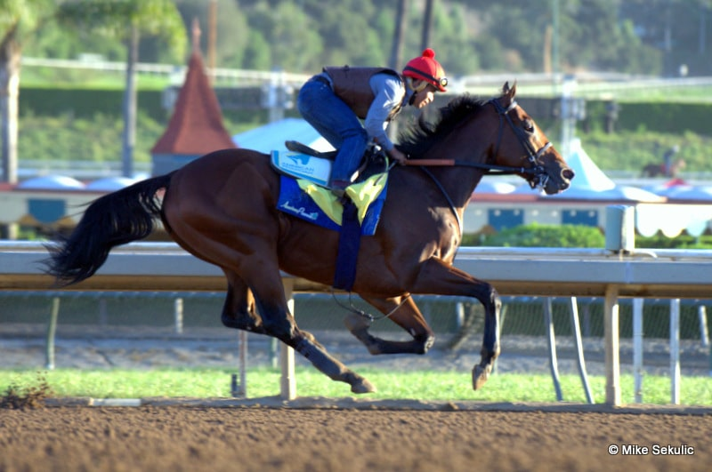 AMERICAN PHAROAH - 10-26-15 - Santa Anita Park - Photo Credit: Mike Sekulic
