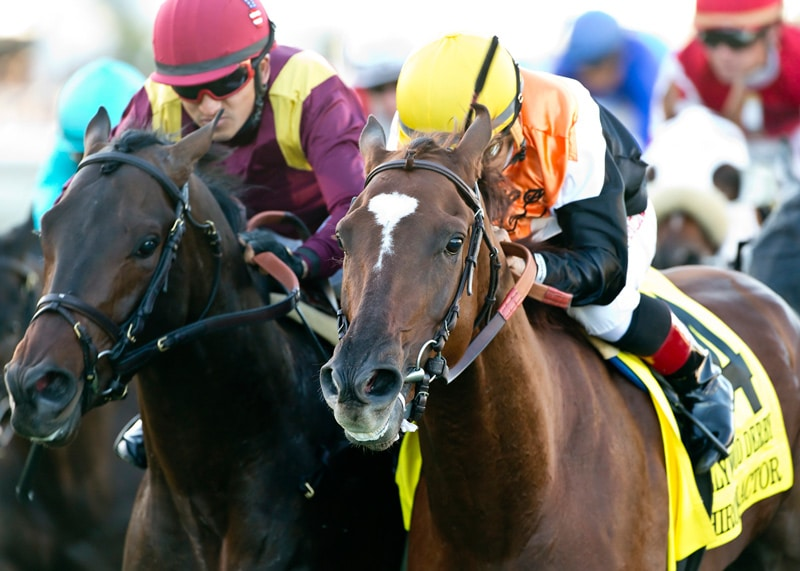 Chiropractor rallies to win the Grade I $300,000 Hollywood Derby Saturday at Del Mar - 11-28-15 - Photo Credit: Benoit Photo
