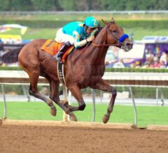 Mike Sekulic Amazing Horse Photos Now Available for Purchase