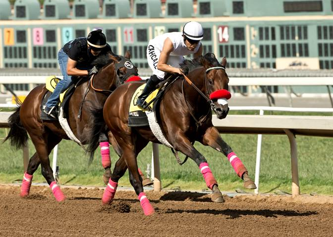 Nyquist worked four furlongs on Santa Anita's fast main track Sunday morning in preparation for his three-year-old debut in the Grade II San Vicente Stakes - Photo Credit: ©Benoit Photo