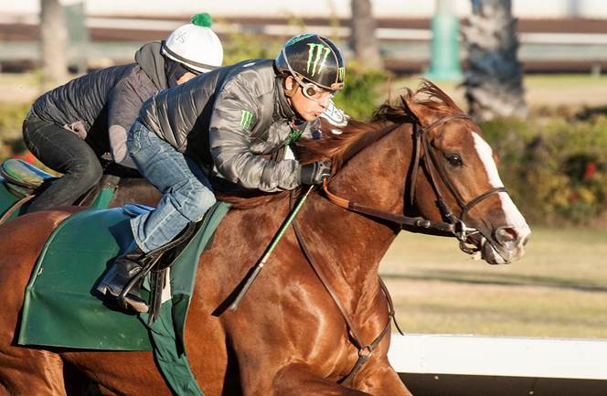 California Chrome working out with Victor Espinoza on board - Photo Credit: ©Benoit Photo