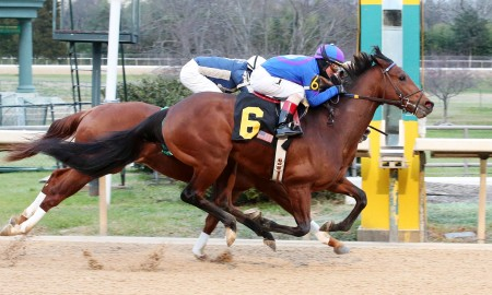 DISCREETNESS - The Smarty Jones - 9th Running - 01-18-16 - R08 - OP - Finish - Photo Credit: Coady Photography
