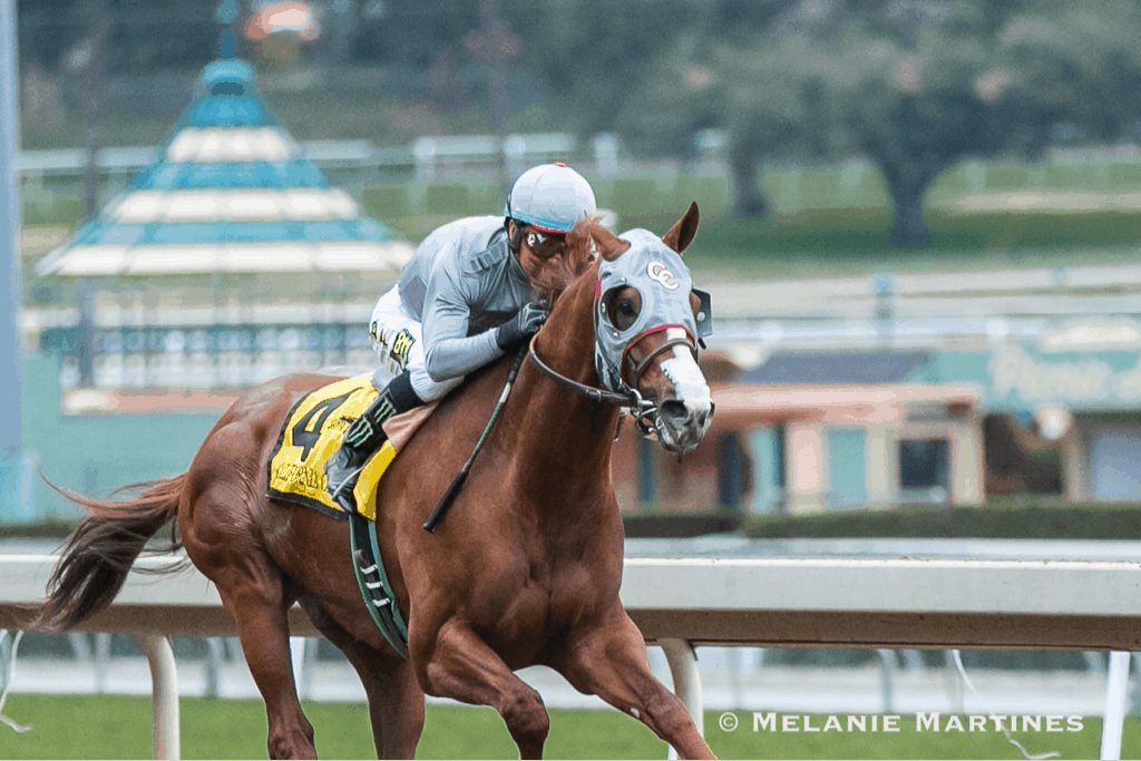 California Chrome winning Grade II, $200,000 San Pasqual Stakes - Photo Credit: Melanie Martines