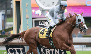 California Chrome winning Grade II, $200,000 San Pasqual Stakes - Photo Credit: Melanie Martines