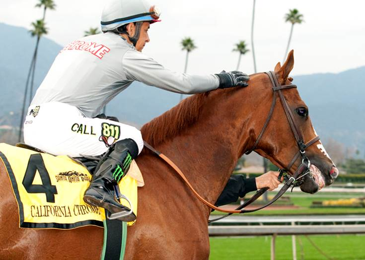 California Chrome Surpasses Tiznow as all-time leading Cal-Bred money winner after winning San Pasqual - Photo Credit: Benoit Photo