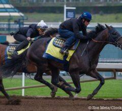 Mor Spirit Pulled Up During Work Today at Santa Anita