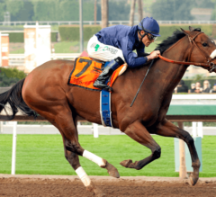 Local Standouts Taris and Tara's Tango Take On Invader Penwith in G1 Santa Margarita Stakes