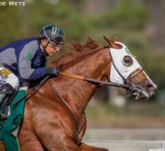 California Chrome Heads Field of Eight in Saturday's G2 San Pasqual Stakes at Santa Anita Park