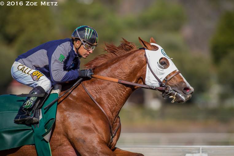 Horse of the Year California Chrome Flashes in 1:10.04 Going Six Furlongs at Santa Anita - Photo Credit: ©2016 Zoe Metz
