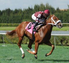 Gulfstream Park Notes: Conquest Big E Turns in Final Work for Holy Bull