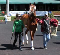 All Eyes on Catch a Glimpse in G3 Herecomesthebride Stakes at Gulfstream Park