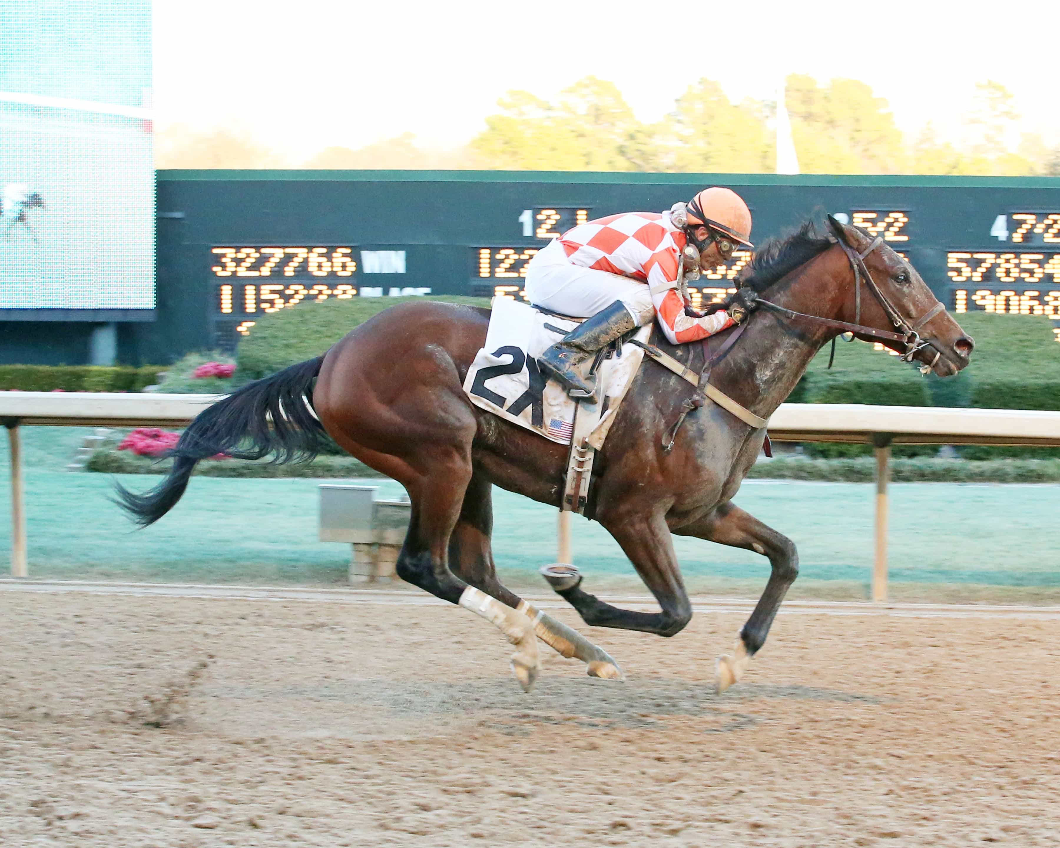 SUDDENBREAKINGNEWS - The Southwest - 51st Running (Grade III) - 02-15-16 - R09 - OP - Credit Coady Photography