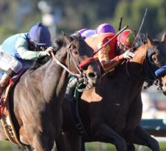 Gold Cup Preview: Hoppertunity Back from Dubai