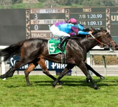 Bolo Defeats Favored Obviously in G2 Arcadia Stakes, Om Finishes Third