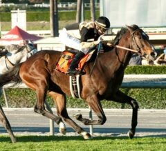 French-bred Flamboyant Once Again Impressive in G2 San Marcos Stakes