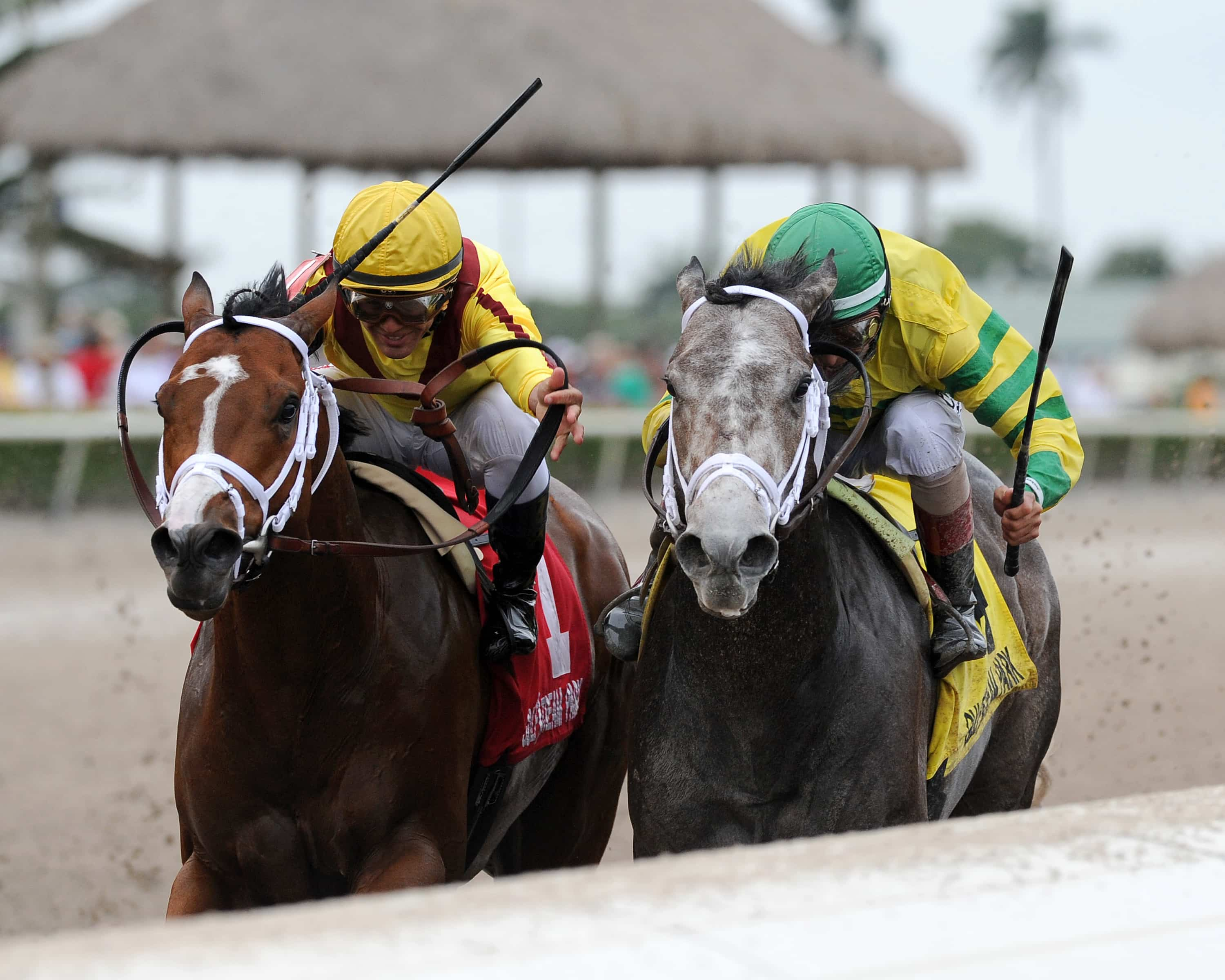 Blofeld passing Stanford in the Gulfstream Park Handicap - Photo Credit: Kenny Martin