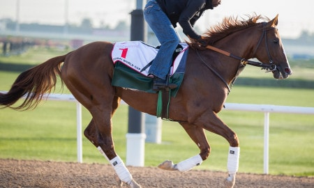 California Chrome training in Dubai - Photo Credit: Melanie Martines