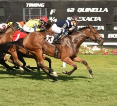 Great Britain-Bred Baciami Piccola Takes G3 Florida Oaks in Whirlwind Rally