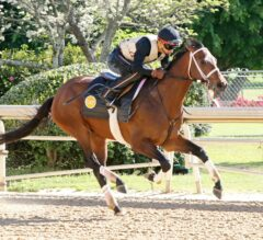Oaklawn Barn Notes: American Pioneer Leads Friday's Works for Festival Races