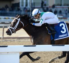 Unified, Awesome Gent Head G3 Bay Shore Field Saturday at Aqueduct