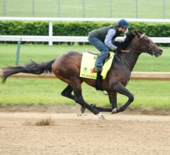 Derby and Oaks News: Exaggerator, Brody's Cause Post Five-Furlong Drills for Derby 142