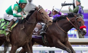 Nyquist (inside) defeats Swipe in the Breeders' Cup - Photo Credit: Melanie Martines