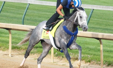 Mohaymen - Work - CD - 042016-Mohaymen Photo Credit: Churchill Downs/Coady Photography