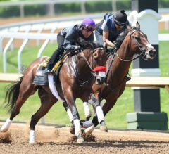 Undefeated Nyquist Makes First Appearance on Track at Churchill Downs