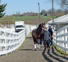 Keeneland Barn Notes: Nyquist Jogs on Training Track, Work Scheduled Friday