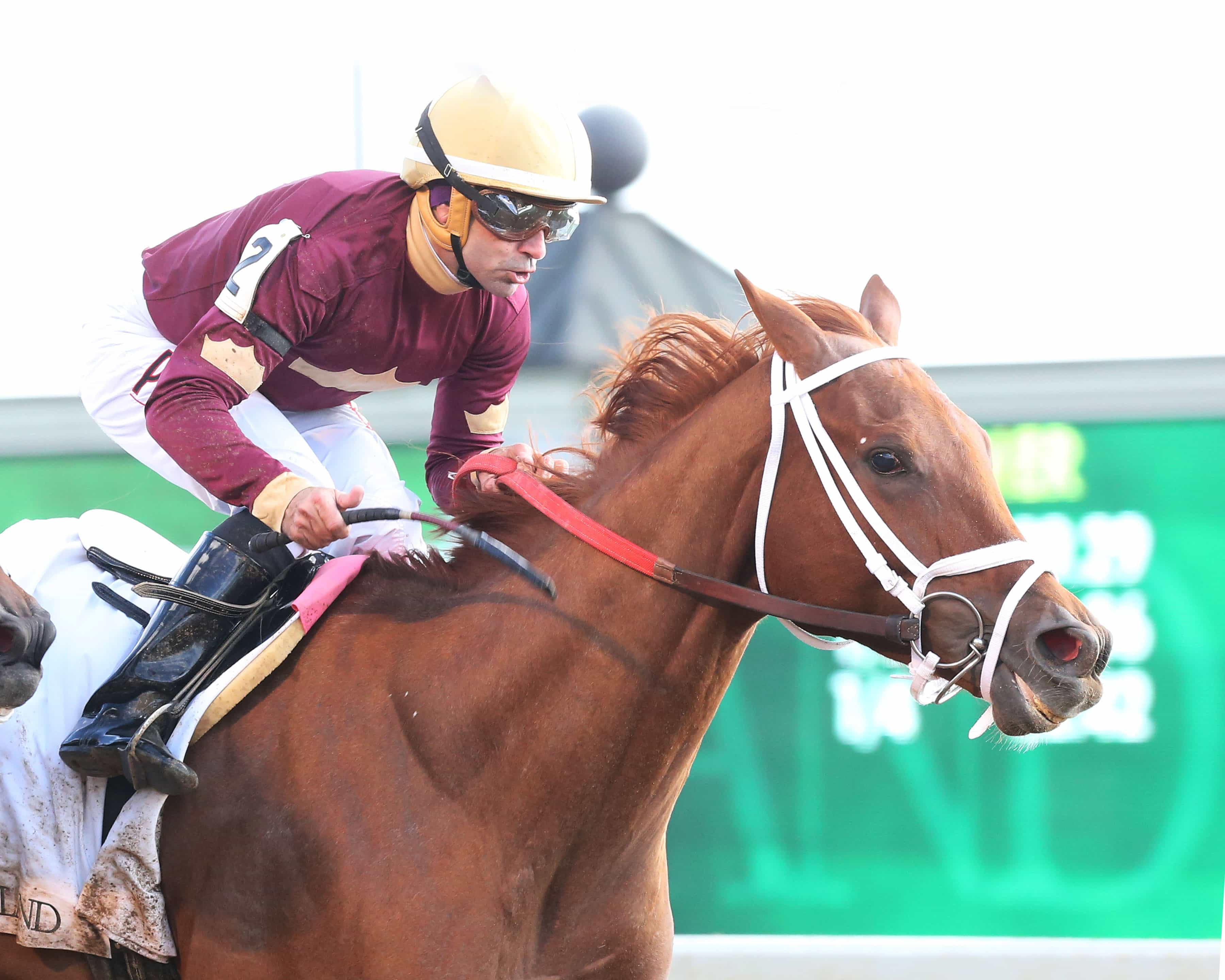 SHEER DRAMA The Madison Gr I - 15th Running Keeneland Race Course Lexington, Kentucky April 9, 2016 Race #09 Purse $300,000 7 Furlongs 1:22.07 Harlod L. Queen, Owner David Fawkes, Trainer Joe Bravo, Jockey Stopchargingmaria (2nd) Wavell Avenue (3rd) $18.80 $8.00 $4.60 Order of Finish - 2, 12, 3, 5 Please Give Photo Credit To: / Coady Photography
